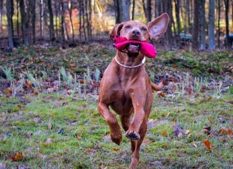 WILDBORN Hunde-Futterdummy